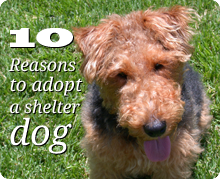 10 Reasons to adopt a shelter dog. Cute dog sitting in grass.