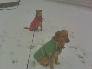 Molly and Gunner in the snow