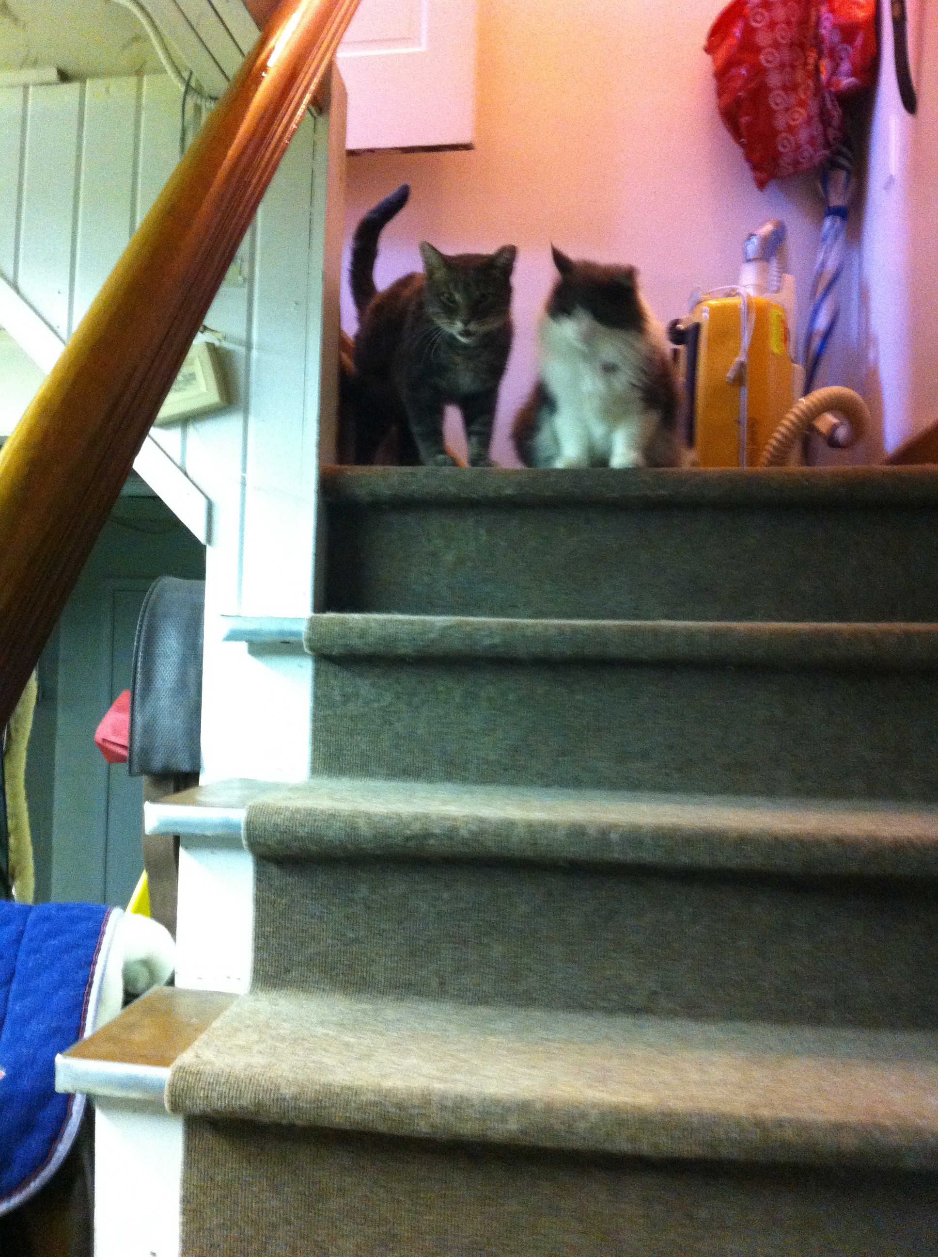 Z Z manages all from the top of the stairs.