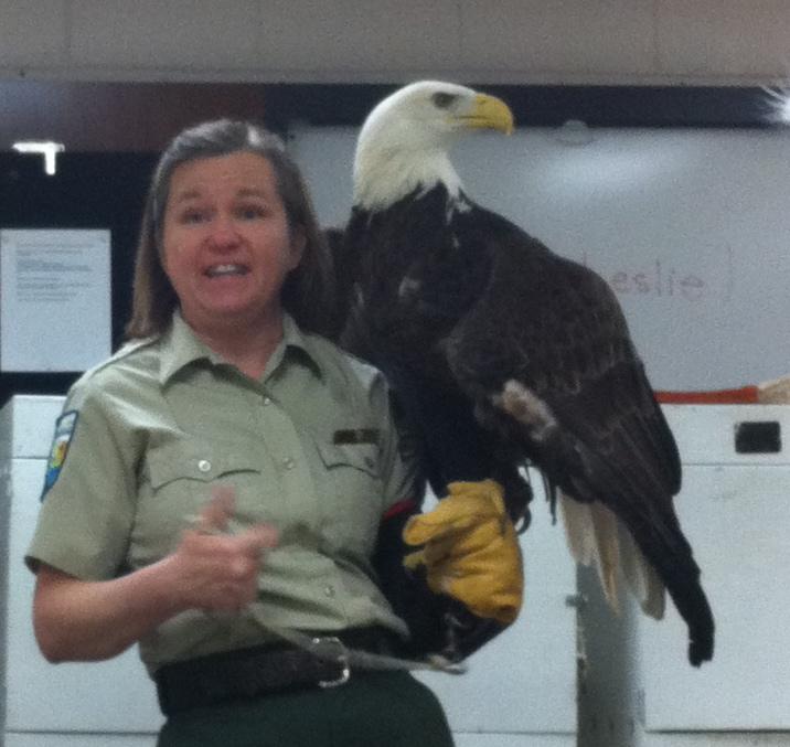 A female Bald Eagle.